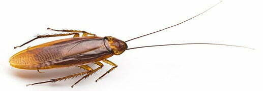 Cockroach Pest Control Perth to Make Your Premise Free of Roaches
